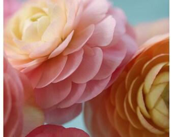 Flower Photograph - Ranunculus Print - Light From Within - Fine Art Photograph - Flower Art - Botanical Print - Pink Art - Oversized Art