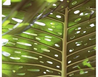 Nature Photograph - Leaf Photography - Botanical Photograph - Tropical Light - Fine Art Photograph - Alicia Bock - Floral Art -Botanical Art