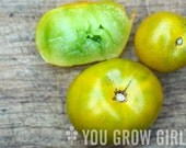 Lime Green Salad Dwarf Green Tomato