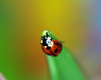 Ladybug,Ladybug Print, Ladybug Art, Red Ladybug,Ladybug wall art