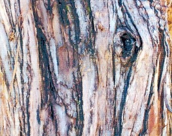 The Eye of the Creep. A Mysterious Eye Peering Out of a Park Tree Trunk. Denver, Colorado.