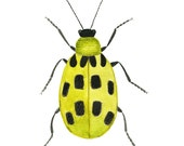 Yellow Beetle, Spotted Insect, Bug,Entomology, Illustration, Watercolor Print
