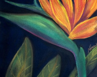 "Pastel drawing  bird of paradise multi color rainbow flower floral garden art 12""x12"""