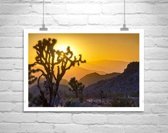 Joshua Tree, Desert Photographs, Tree Art, Southern California, Sunsets, Silhouettes Art, Mojave Desert, Cactus Picture