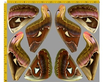 Atlas Moth Fabric Panel for Costume Wings - 100% Cotton Woven