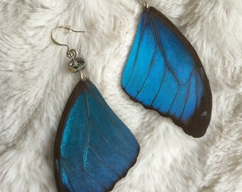 Real Blue Morpho Earrings - cruelty free