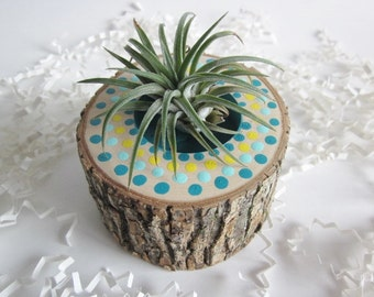 Air plant planter,  Cubicle decor, Hickory wood air plant holder,  Desk decor, planter