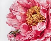 Pink Peony with a honey bee - Watercolor giclee 8x10 print