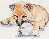 SHIBA INU SOFTBALL Original Watercolor on Ink Print Matted 11x14 Ready to Frame