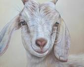 SAM DOLMAN Original oil painting goat