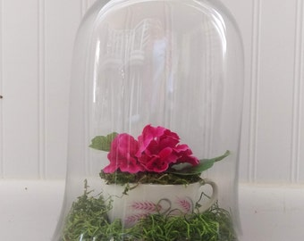 Pink African Violet in Teacup with Moss in Glass Cloche