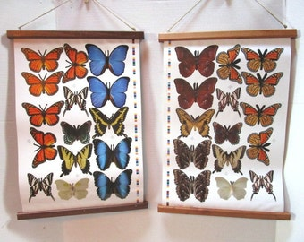 Beautiful Double Sided Butterfly Print Wall Hanging w/ Handmade Walnut or Cherry Wood Edging, Nature Art, Science Display, Monarch Morpho