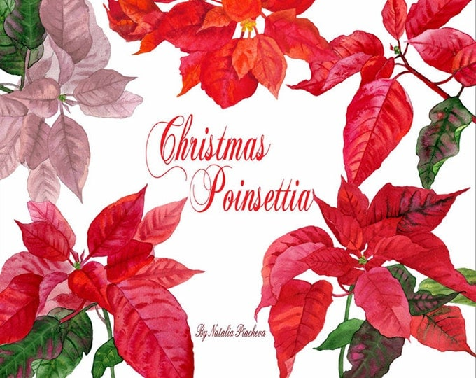 Christmas Poinsettia. Watercolor clipart, Christmas, clip art, christmas gifts, home decoration, gift,floral clipart, new year,