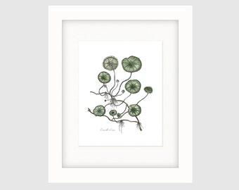 Instant Download Printable Art, Vintage French Botanical Print, Wall Art Prints, Wall Prints, Wall Decor