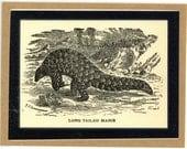 Antique Illustration of Long Tailed Manis Black & White - Laminated Boomark