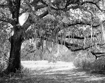 New Orleans Oak Tree Photograph, Black and White Landscape Fine Art Photography Print, Louisiana, City Park, Wall Art, Home Decor