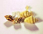 Nassa Sea Shell Post Earrings Shell Earrings Real Seashell Studd Earrings gold or silver posts Gift for Her Beach Wedding Bridesmaid Gift