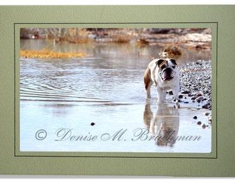 Bulldog Cards - English Bulldog Cards - Bulldog in Water Card - Bulldog Notecards - Custom Bulldog Cards