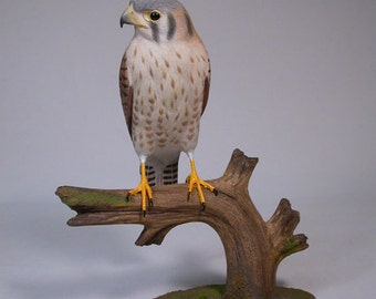 9-1/2 inch American Kestrel female Hand Carved Wooden Bird Carving