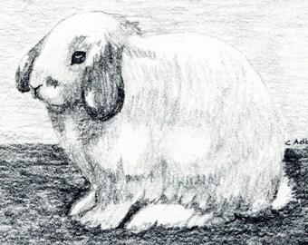 Bunny Rabbit Original Art - 4 x 6 Pencil Sketch for Sale