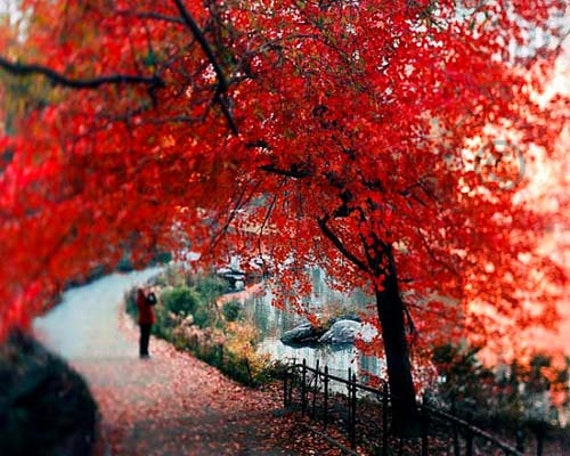 Red Tree, Central Park, Nature Photography, Fall, Red, Black, New York Print, Large Wall Art
