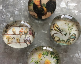 Birds of the Garden set of four Glass Magnets