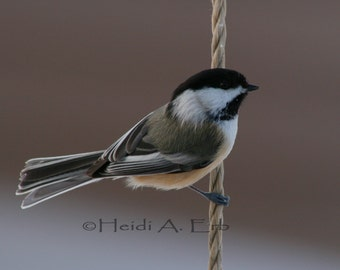 Chickadee-Bird-Nature-Notecard-Card-Photo-Photography-photo-Print
