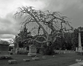 Fall print, cemetary photography, Fine Art Photography, Spooky Cemetary tree, Sepia photography, tree photography, cemetary tree print, tree