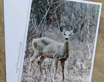Deer Photo Note Card. Montana Wildlife Nature Photography. Ready to Ship.