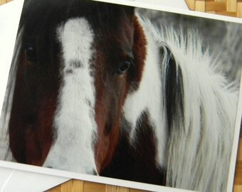 Horse Thoughts Photo Note Card - Equine Photography Montana