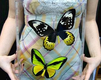 "Real Goliath Birdwing Butterflies - 10"" x 13"" x 1.5"""