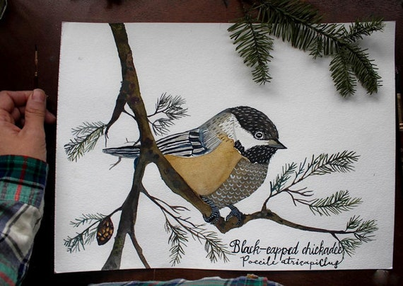 Black Capped Chickadee Bird Art-  Original Watercolor Painting by Sarah Rose Storm