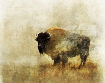 Peaceful Bison 02: Giclee Fine Art Print 13X19