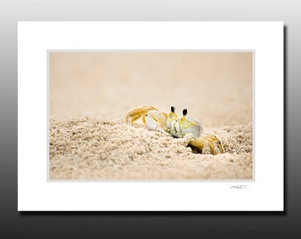 Sand Ghost Crab Photographed in Bethany Beach Delaware, Small Matted Print, Wall Art Gifts, Ready for Framing, Fits 5x7 inch Frame