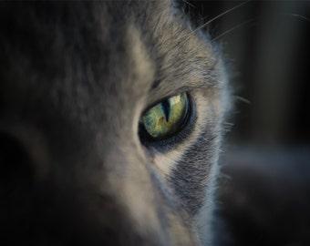 Feline Cat Photography gorgeous eyes,kitty lover's gift idea,grey tabby cat,closeup,striped cat,cute kitty,adorable kitty,light green eyes