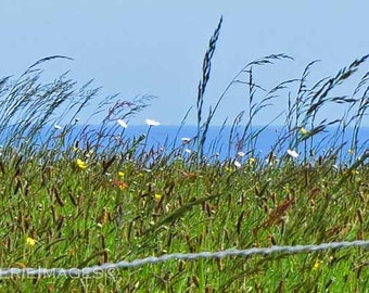 Normandy Meadow and Sea, Color Photo 5x7 or 8x10