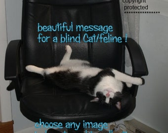blind cat/special needs ..could always see ( a best friend's song ) choose an image /sentimental card/unique empathy condolence cards