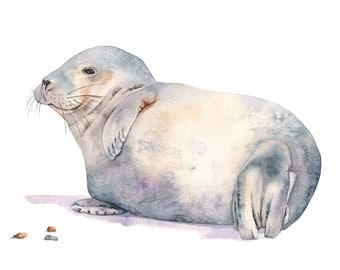 Seal watercolor painting, seal print, S4816, 5 by 7 size small print, sea life watercolor, contemporary coastal wall art, nursery print