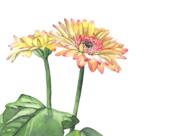 Gerbera print of watercolour painting - daisy watercolour painting print -G8215 minimalist art- botanical wall art 5 by 7 size print
