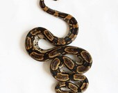 65% OFF Snake Photography - Peruvian Long Tail Boa - S is for Snake - 8x10 Fine Art Photo Print