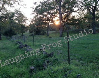 Stock Photo Digital Download - Sunset in the Meadow - Dusk in the Forest - Mystical Forest - Barbed Wire Fence