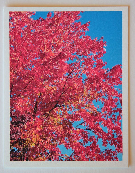 Fall Leaves, October Glory, note card, blank greeting card, trees, woodland, blue sky, red, fine art, single card, photo greeting cards,