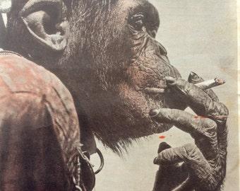 Vintage 1940s Magazine Forties Mag CHIMPANZEE ZOO Animal Cruelty Smoking Chimp