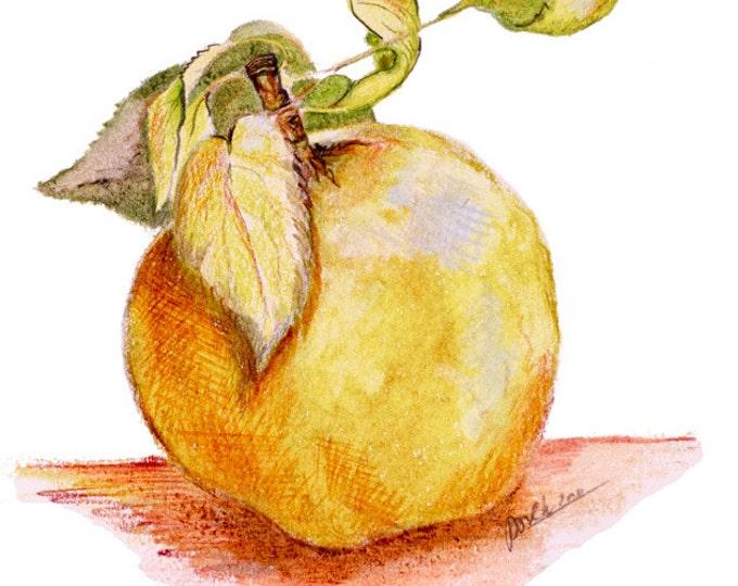 Apple, Real Apple, One Big Apple, Vegan Beauty, Fruit Beauty, Health Pocket, Apples, Health Bomb, Elegant Fruit, Harvest Celebrations