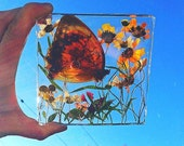 Nature Inspired Wall Hanging, Sun Catcher. Preserved Butterfly + Pressed Flowers, 4X4.