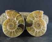 Excellent   Ammonite slice , Ammonite halves , Fossil ammonite  ,Jewelry making Supplies S6077