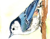 ACEO Limited edition of 2/25- A white breasted nuthatch, Bird art print of an original ACEO watercolor, Gift for her, Bird lovers
