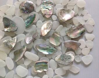 Abalone Shell Pieces Beautifully shaped Mendocino Coast