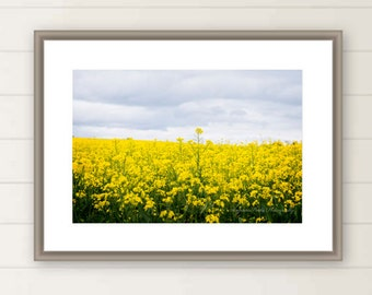 Canola flowers field photograph yellow flower field photo meadow print spring harvest Western Australia images oversized large wall art gift