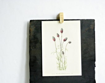 Vintage 1950's Botanical Bookplate - Golden Pea & Prairie Clover - Spring Home Decor, Gifts for Her, Mothers Day, Summer Boho, Floral Decor
